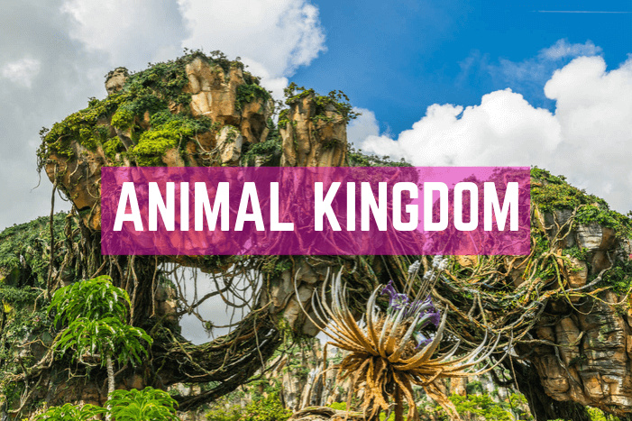 Animal Kingdom in Orlando