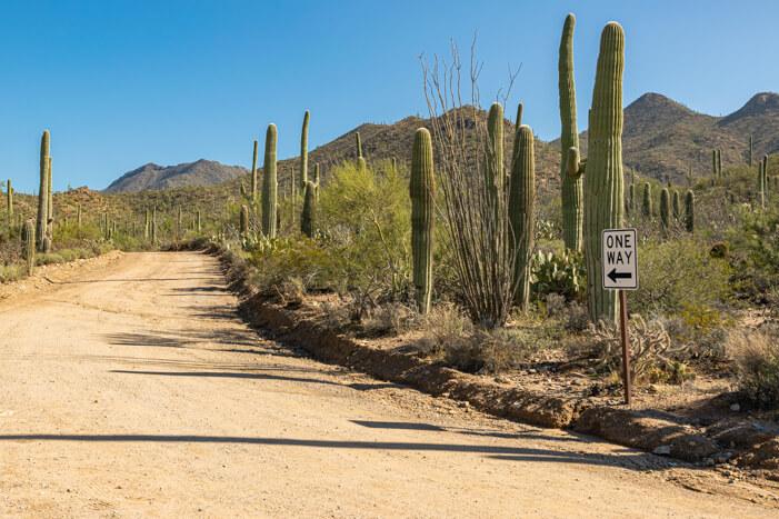 Bajada Loop im Saguaro Nationalpark West