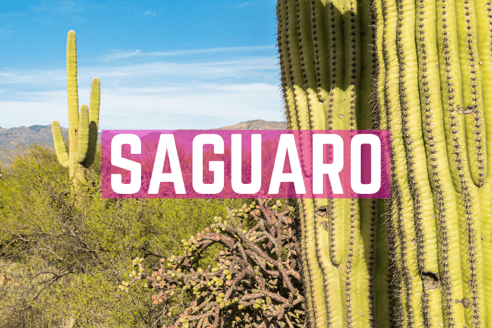 Saguaro Nationalpark Tipps