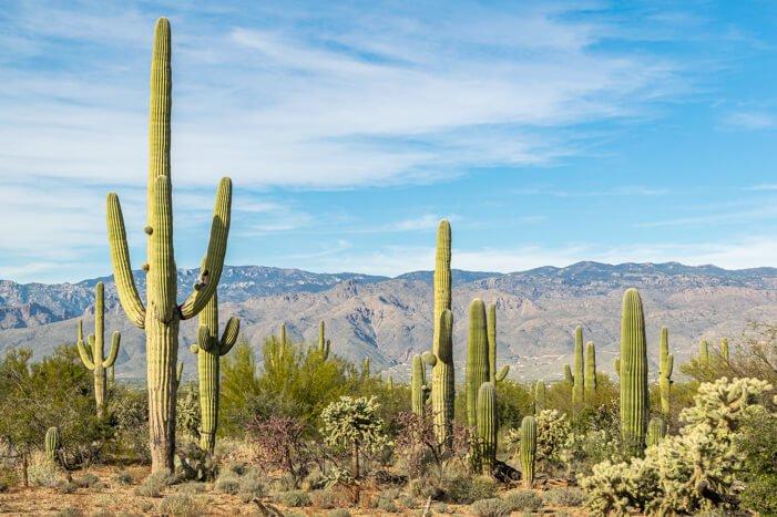 Atemberaubende Landschaft in Tucson Arizona: Der Saguaro NP
