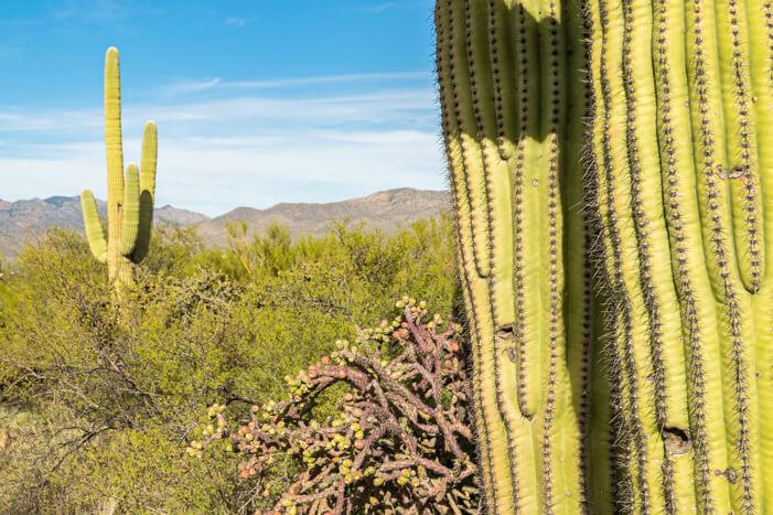 Fotografieren Landschaft Arizona USA: Saguaro NP