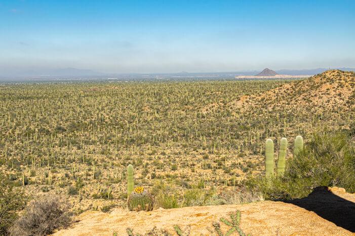 Valley View Overlook Trail: Ausblick auf den Saguaro Nationalpark